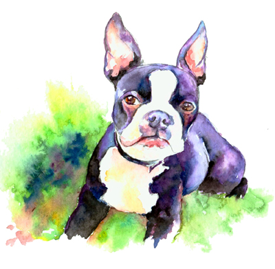 bostonbulldog